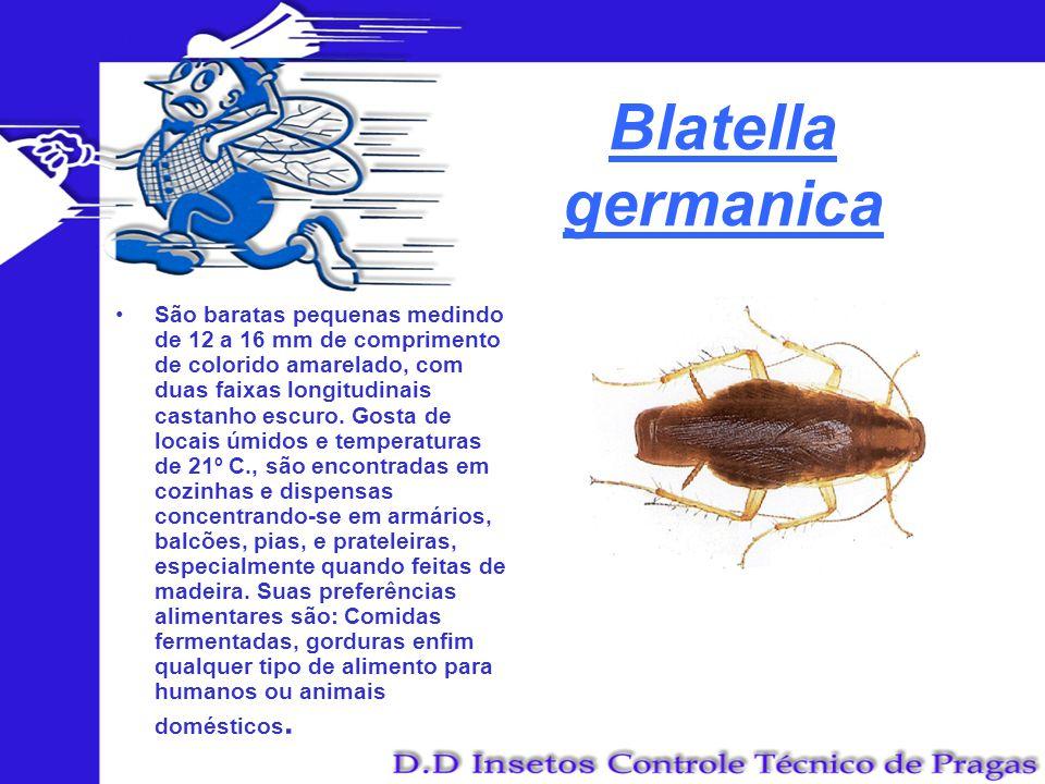 Blatella germanica São baratas pequenas medindo de 12 a 16 mm de comprimento de colorido amarelado, com duas faixas longitudinais castanho escuro. Gos