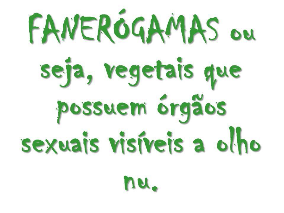 FANERÓGAMAS ou seja, vegetais que possuem órgãos sexuais visíveis a olho nu.