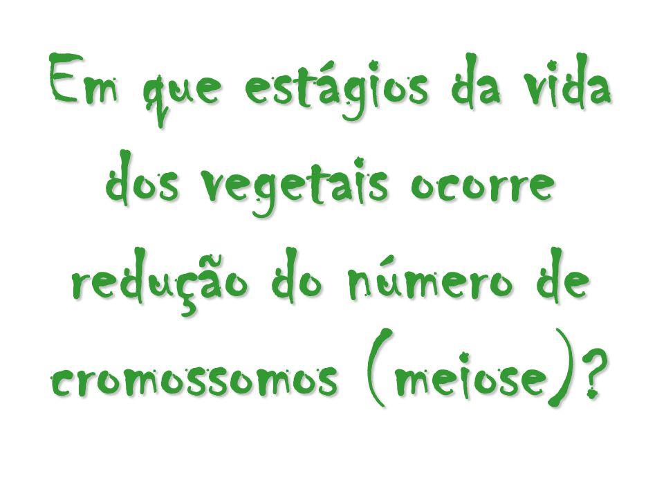Em que estágios da vida dos vegetais ocorre redução do número de cromossomos (meiose)?