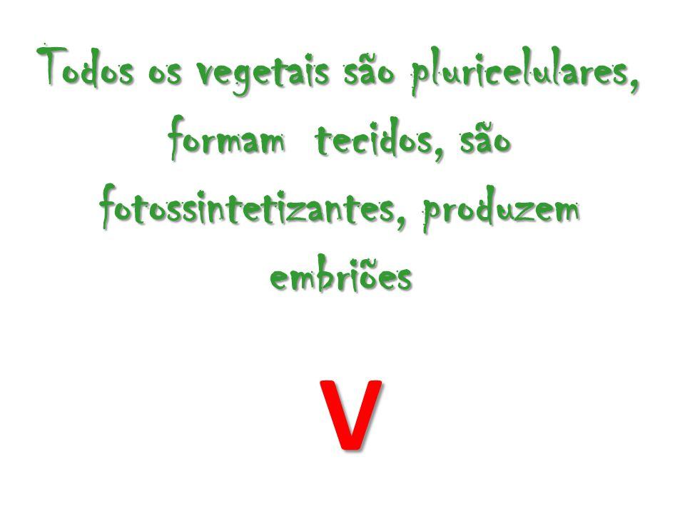 Todos os vegetais são pluricelulares, formam tecidos, são fotossintetizantes, produzem embriões V