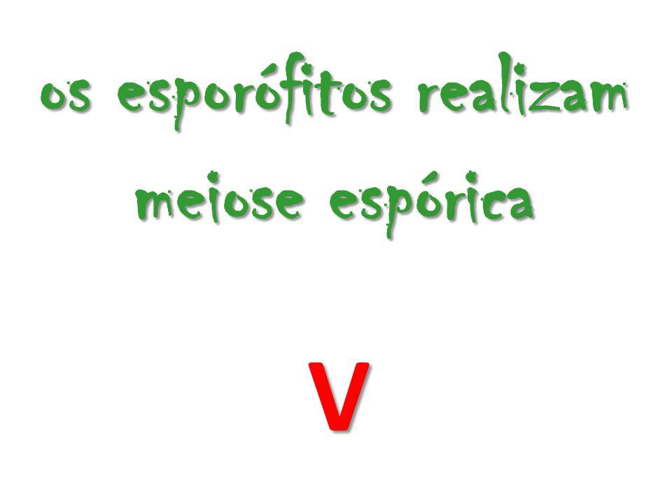 os esporófitos realizam meiose espórica V