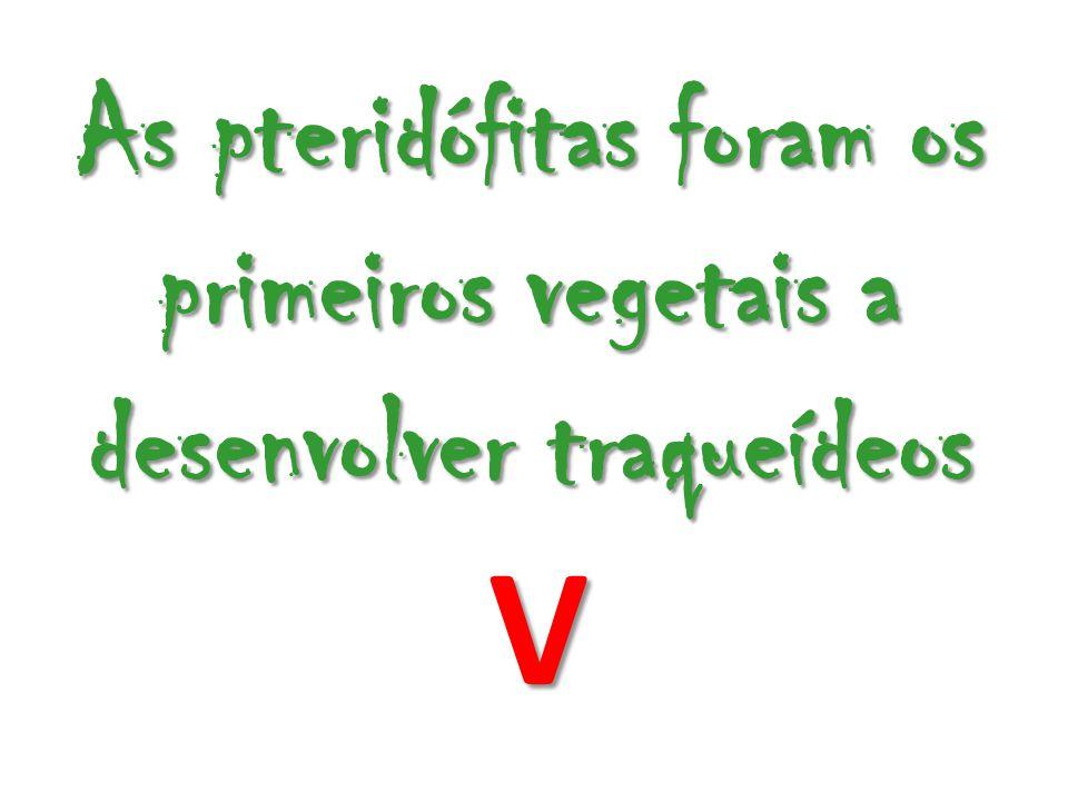 As pteridófitas foram os primeiros vegetais a desenvolver traqueídeos V