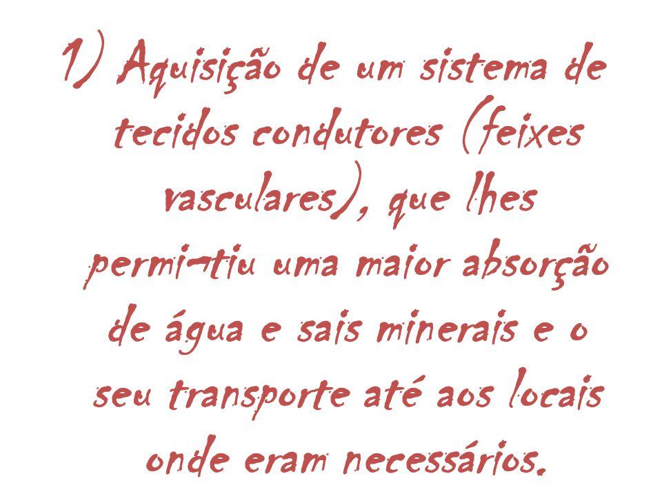 1) Aquisição de um sistema de tecidos condutores (feixes vasculares), que lhes permi¬tiu uma maior absorção de água e sais minerais e o seu transporte