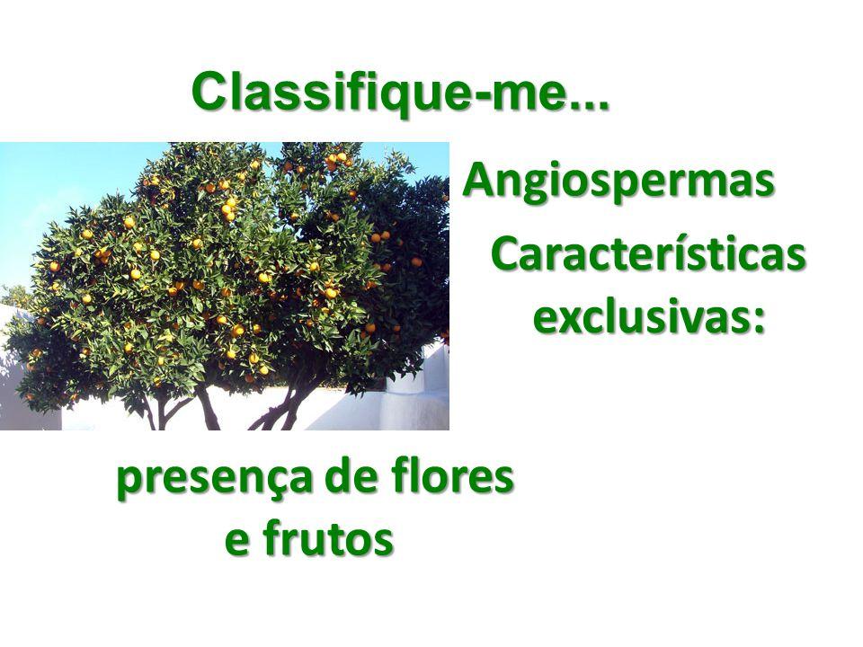 Classifique-me... Angiospermas Características exclusivas: presença de flores e frutos