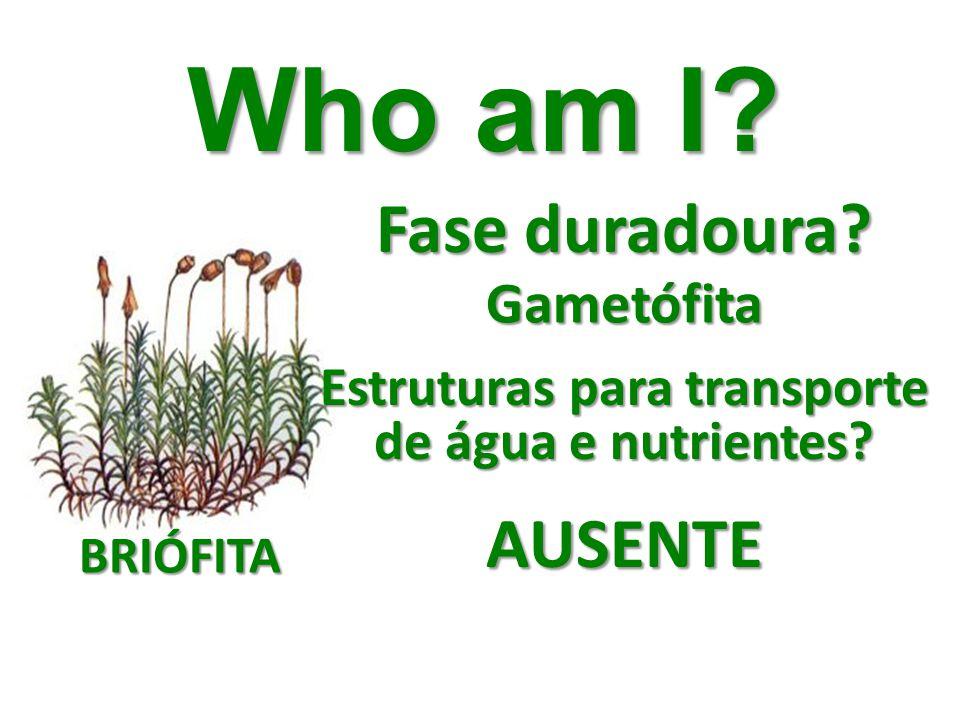 Fase duradoura? Who am I? Gametófita Estruturas para transporte de água e nutrientes? AUSENTE BRIÓFITA