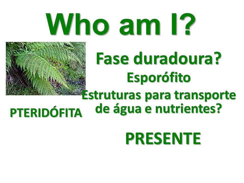 Who am I? Fase duradoura? Esporófito Estruturas para transporte de água e nutrientes? PRESENTE PTERIDÓFITA