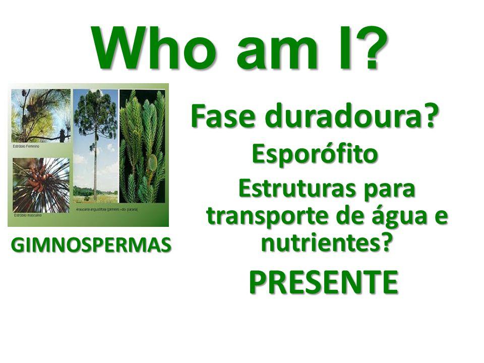 Who am I? Fase duradoura? Esporófito Estruturas para transporte de água e nutrientes? PRESENTE GIMNOSPERMAS
