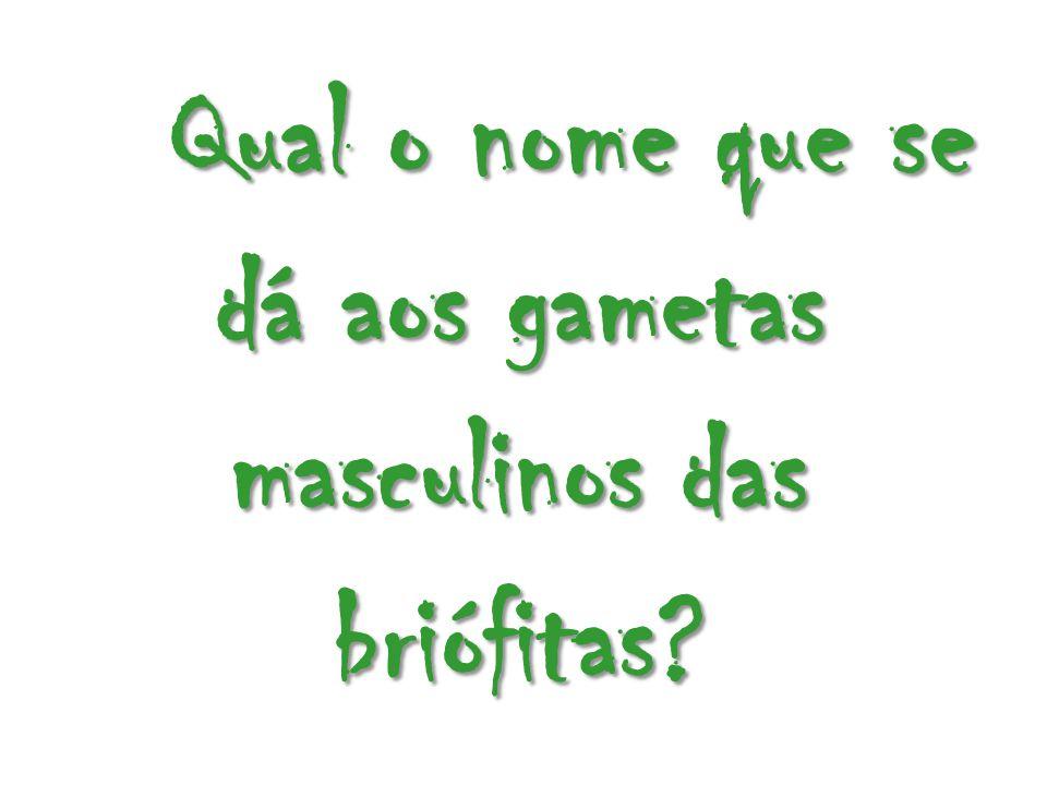 Qual o nome que se dá aos gametas masculinos das briófitas?