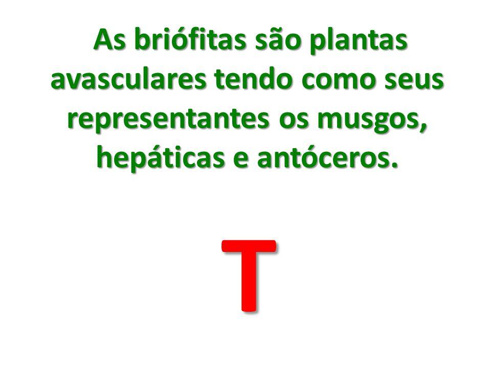 As briófitas são plantas avasculares tendo como seus representantes os musgos, hepáticas e antóceros. As briófitas são plantas avasculares tendo como