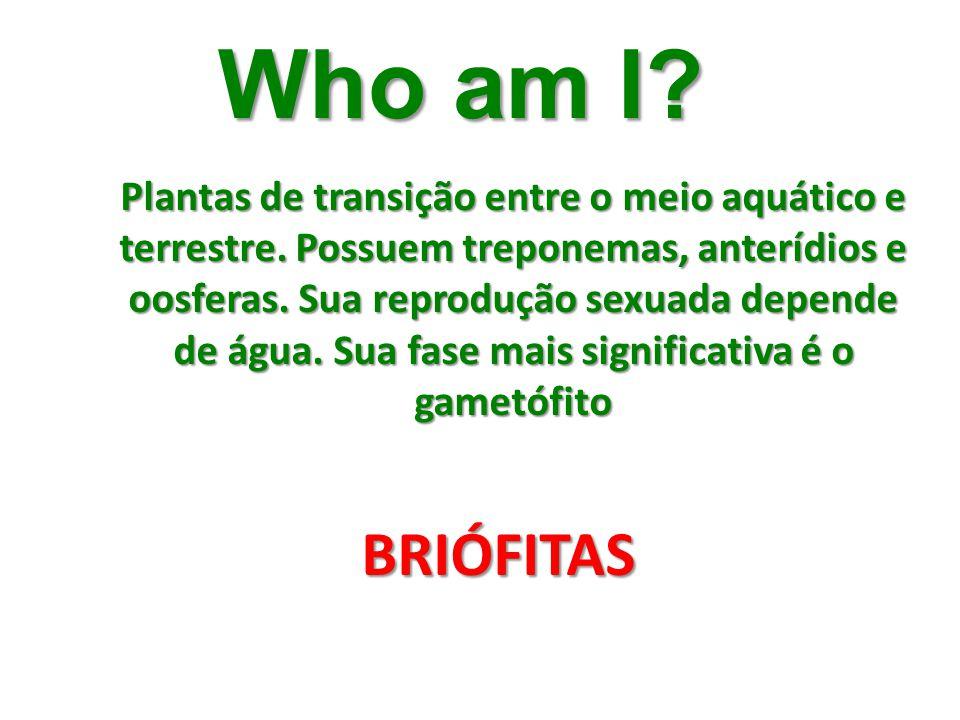 Who am I? Plantas de transição entre o meio aquático e terrestre. Possuem treponemas, anterídios e oosferas. Sua reprodução sexuada depende de água. S