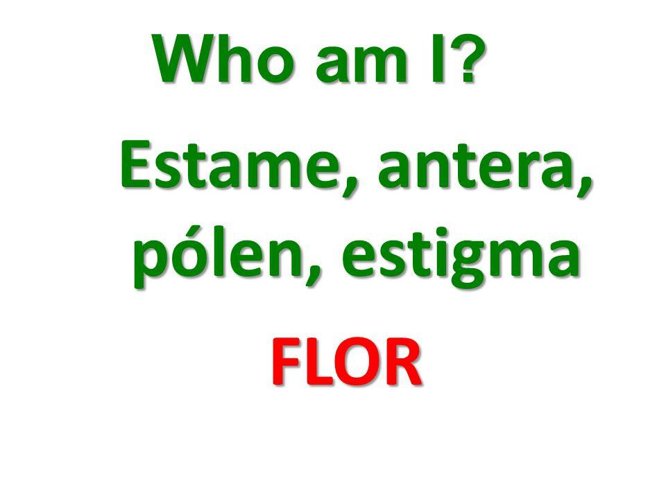 Who am I? Estame, antera, pólen, estigma FLOR