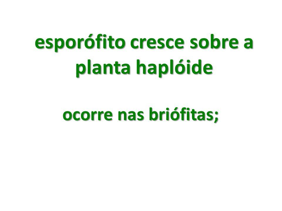 esporófito cresce sobre a planta haplóide ocorre nas briófitas;