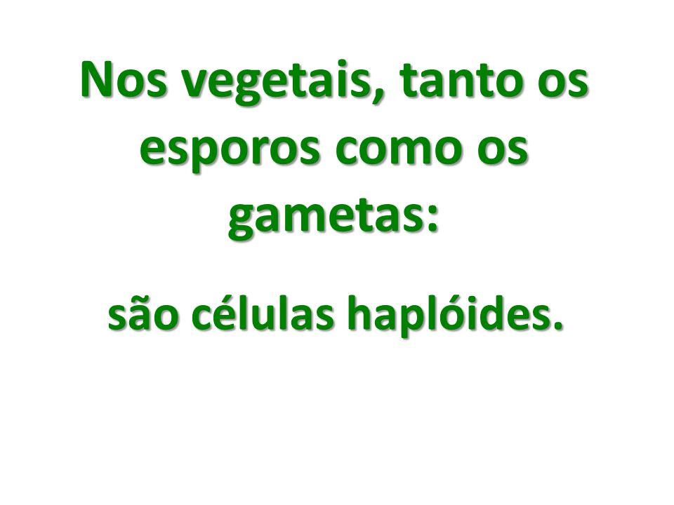 Nos vegetais, tanto os esporos como os gametas: são células haplóides.
