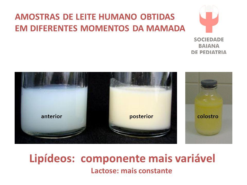 AMOSTRAS DE LEITE HUMANO OBTIDAS EM DIFERENTES MOMENTOS DA MAMADA Lipídeos: componente mais variável Lactose: mais constante anteriorposterior colostro
