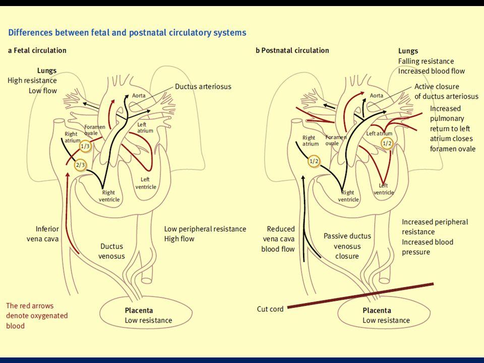 Adaptação Neonatal Volume pulmonar pequeno em relação ao tamanho corporal Maior demanda basal de O2 Trabalho respiratório consome 10% da energia basal.