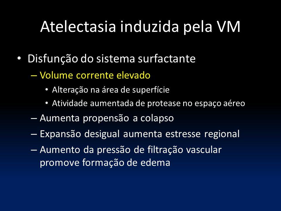 Atelectasia induzida pela VM Disfunção do sistema surfactante – Volume corrente elevado Alteração na área de superfície Atividade aumentada de proteas