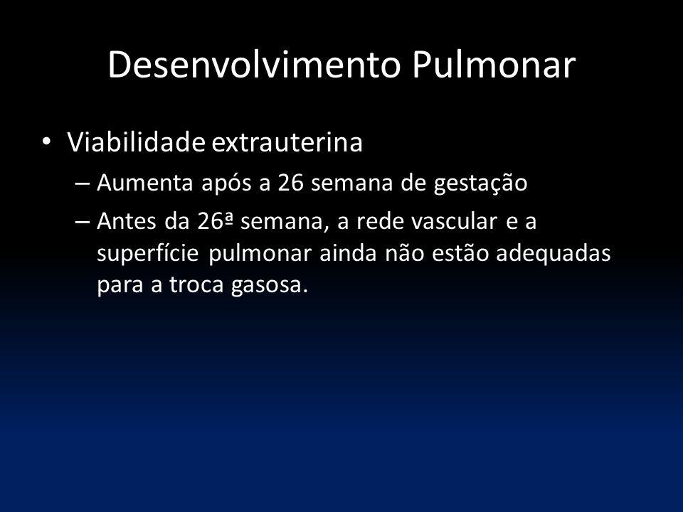 Desenvolvimento Pulmonar Viabilidade extrauterina – Aumenta após a 26 semana de gestação – Antes da 26ª semana, a rede vascular e a superfície pulmonar ainda não estão adequadas para a troca gasosa.