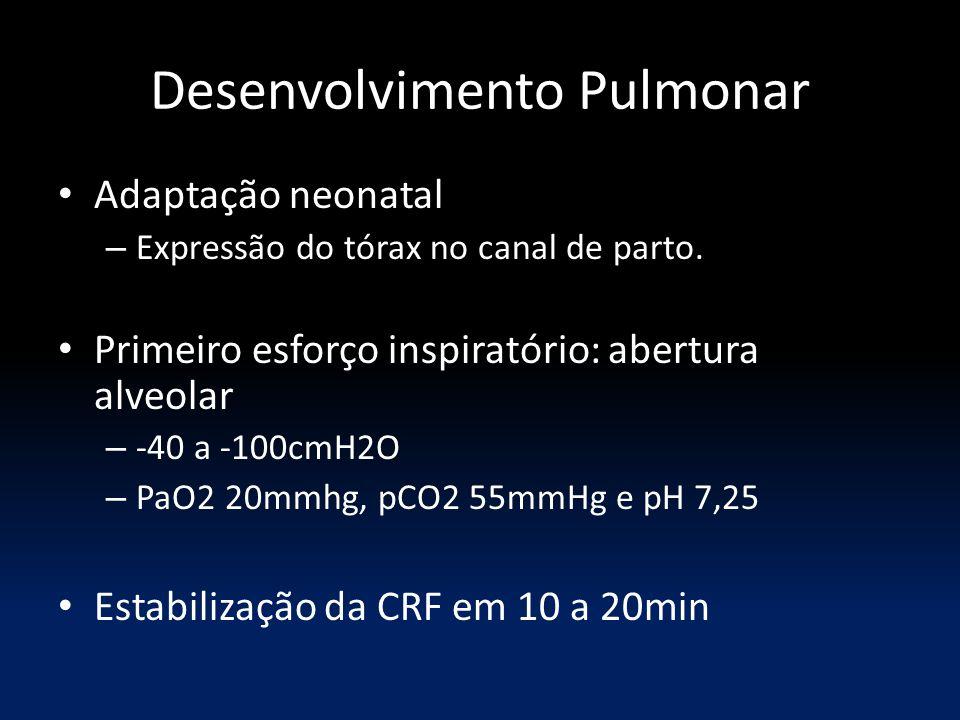 Desenvolvimento Pulmonar Adaptação neonatal – Expressão do tórax no canal de parto. Primeiro esforço inspiratório: abertura alveolar – -40 a -100cmH2O