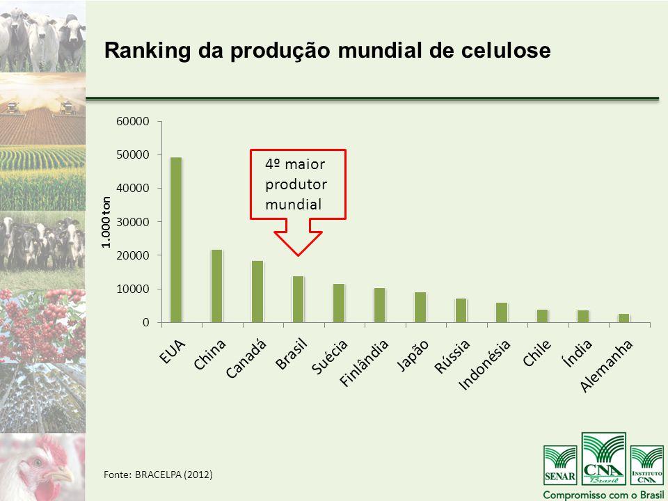 4º maior produtor mundial Ranking da produção mundial de celulose Fonte: BRACELPA (2012)