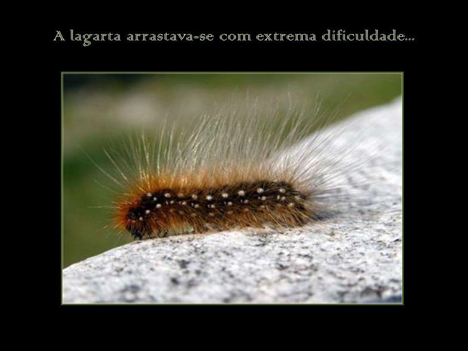 A lagarta arrastava-se com extrema dificuldade...