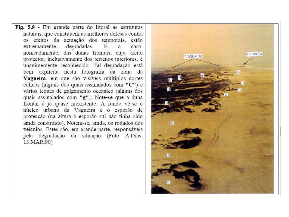 -Plantação do Estorno- características particulares e a sua importância na edificação dunar -Analisar as previsões sobre a evolução da linha de costa nesta praia/ medidas a implementar -A importância da Arte Xávega -Eventual reportagem (fotográfica) no mercado local.