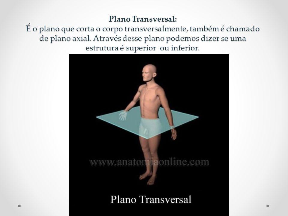 Plano Transversal: É o plano que corta o corpo transversalmente, também é chamado de plano axial. Através desse plano podemos dizer se uma estrutura é