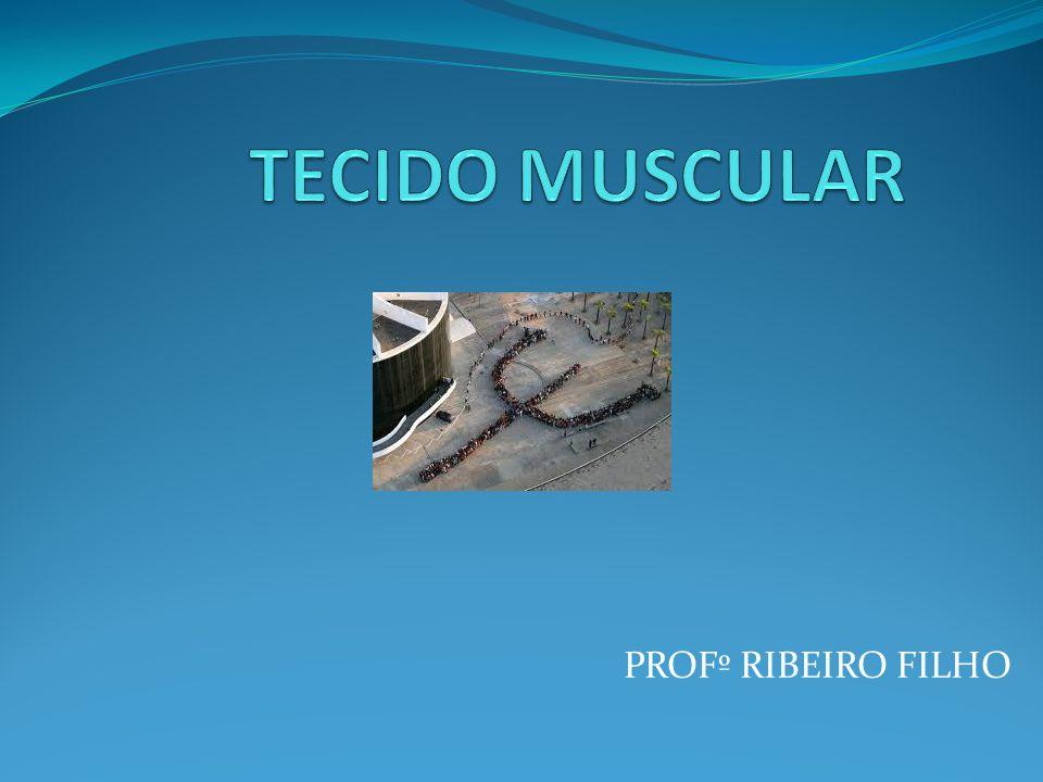 PROFº RIBEIRO FILHO