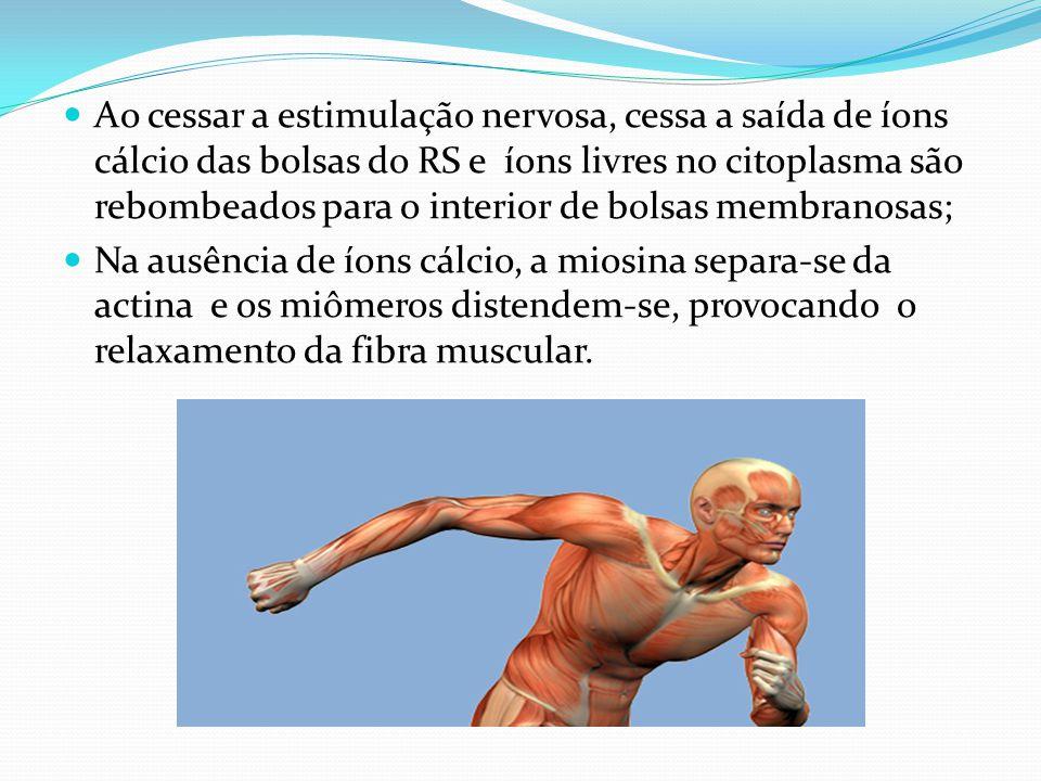 Ao cessar a estimulação nervosa, cessa a saída de íons cálcio das bolsas do RS e íons livres no citoplasma são rebombeados para o interior de bolsas m