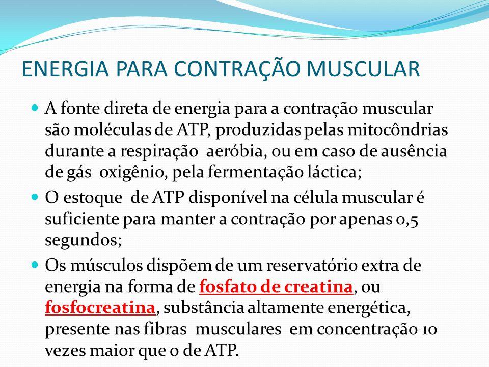 ENERGIA PARA CONTRAÇÃO MUSCULAR A fonte direta de energia para a contração muscular são moléculas de ATP, produzidas pelas mitocôndrias durante a resp
