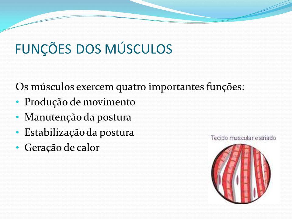 FUNÇÕES DOS MÚSCULOS Os músculos exercem quatro importantes funções: Produção de movimento Manutenção da postura Estabilização da postura Geração de c