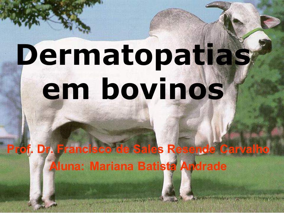 Dermatopatias em bovinos Prof.Dr.