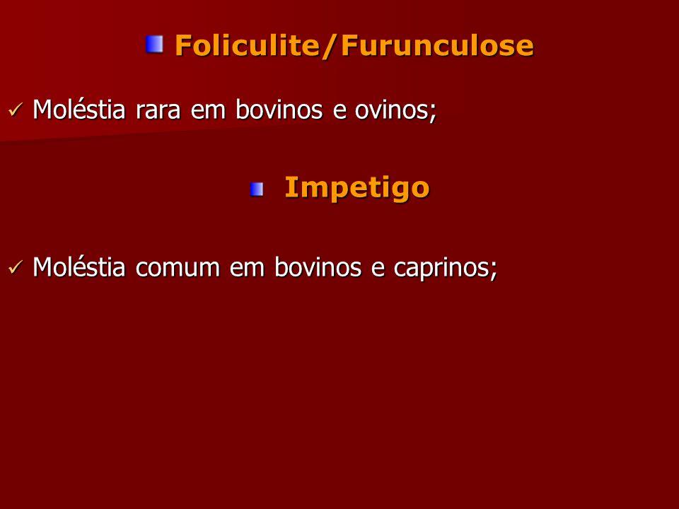 Foliculite/Furunculose Foliculite/Furunculose Moléstia rara em bovinos e ovinos; Moléstia rara em bovinos e ovinos; Impetigo Impetigo Moléstia comum em bovinos e caprinos; Moléstia comum em bovinos e caprinos;