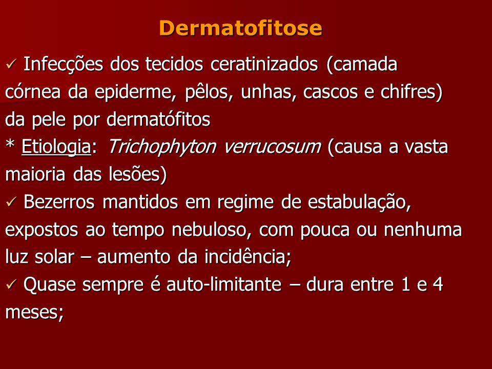 Dermatofitose Infecções dos tecidos ceratinizados (camada Infecções dos tecidos ceratinizados (camada córnea da epiderme, pêlos, unhas, cascos e chifres) da pele por dermatófitos * Etiologia: Trichophyton verrucosum (causa a vasta maioria das lesões) Bezerros mantidos em regime de estabulação, Bezerros mantidos em regime de estabulação, expostos ao tempo nebuloso, com pouca ou nenhuma luz solar – aumento da incidência; Quase sempre é auto-limitante – dura entre 1 e 4 Quase sempre é auto-limitante – dura entre 1 e 4meses;