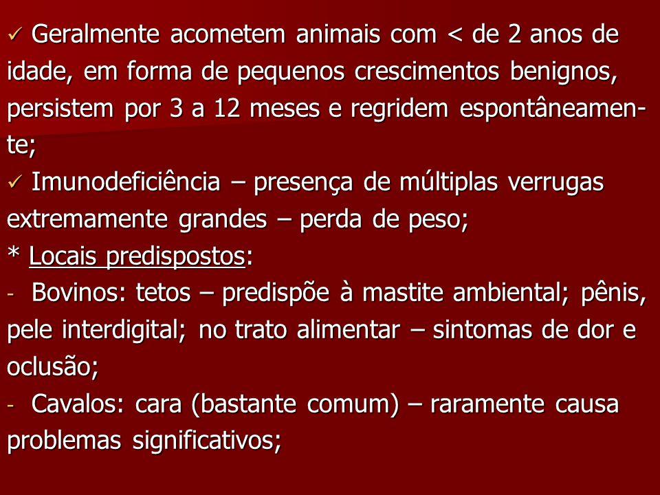 Geralmente acometem animais com < de 2 anos de Geralmente acometem animais com < de 2 anos de idade, em forma de pequenos crescimentos benignos, persistem por 3 a 12 meses e regridem espontâneamen- te; Imunodeficiência – presença de múltiplas verrugas Imunodeficiência – presença de múltiplas verrugas extremamente grandes – perda de peso; * Locais predispostos: - Bovinos: tetos – predispõe à mastite ambiental; pênis, pele interdigital; no trato alimentar – sintomas de dor e oclusão; - Cavalos: cara (bastante comum) – raramente causa problemas significativos;