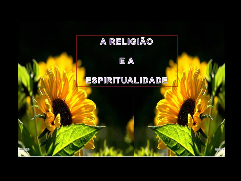 A religião não indaga nem questiona. A espiritualidade questiona tudo.