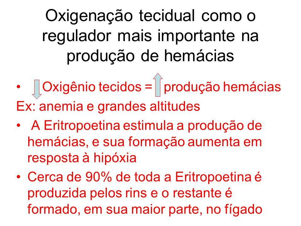 Oxigenação tecidual como o regulador mais importante na produção de hemácias Oxigênio tecidos = produção hemácias Ex: anemia e grandes altitudes A Eri