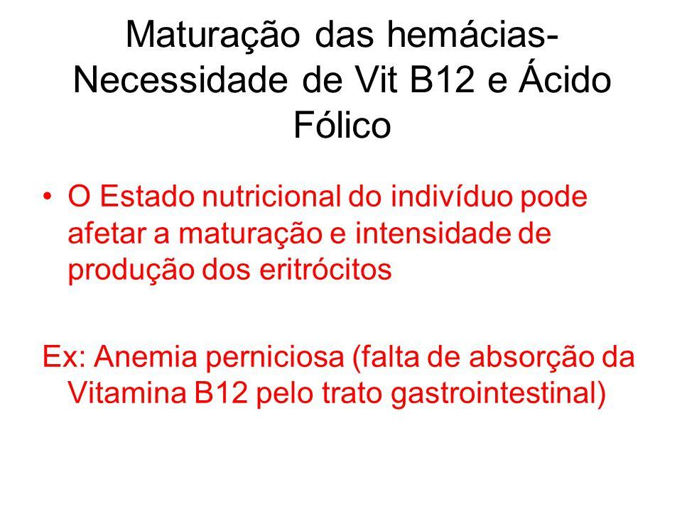 Maturação das hemácias- Necessidade de Vit B12 e Ácido Fólico O Estado nutricional do indivíduo pode afetar a maturação e intensidade de produção dos