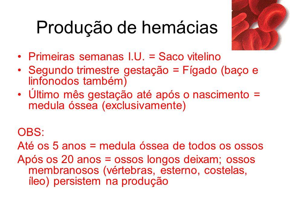 Produção de hemácias Primeiras semanas I.U. = Saco vitelino Segundo trimestre gestação = Fígado (baço e linfonodos também) Último mês gestação até apó