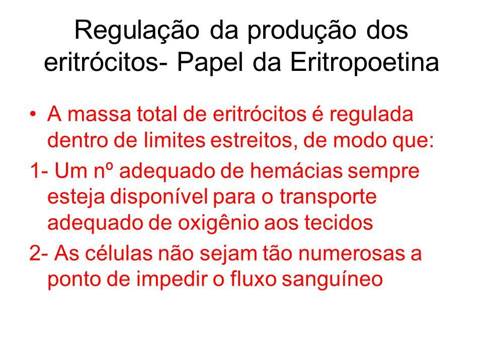 Regulação da produção dos eritrócitos- Papel da Eritropoetina A massa total de eritrócitos é regulada dentro de limites estreitos, de modo que: 1- Um