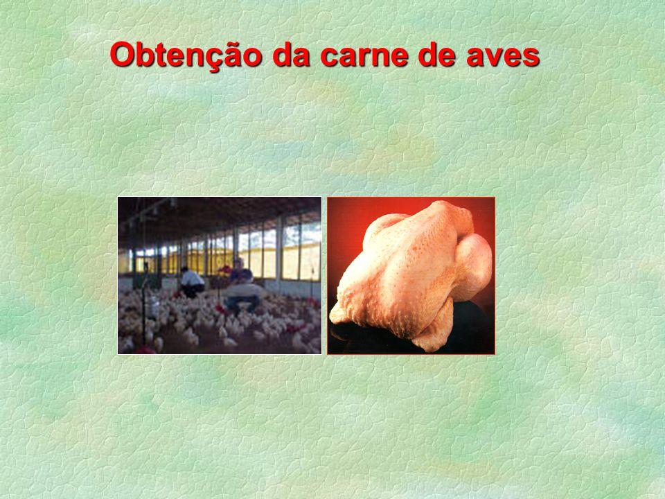 Obtenção da carne de aves