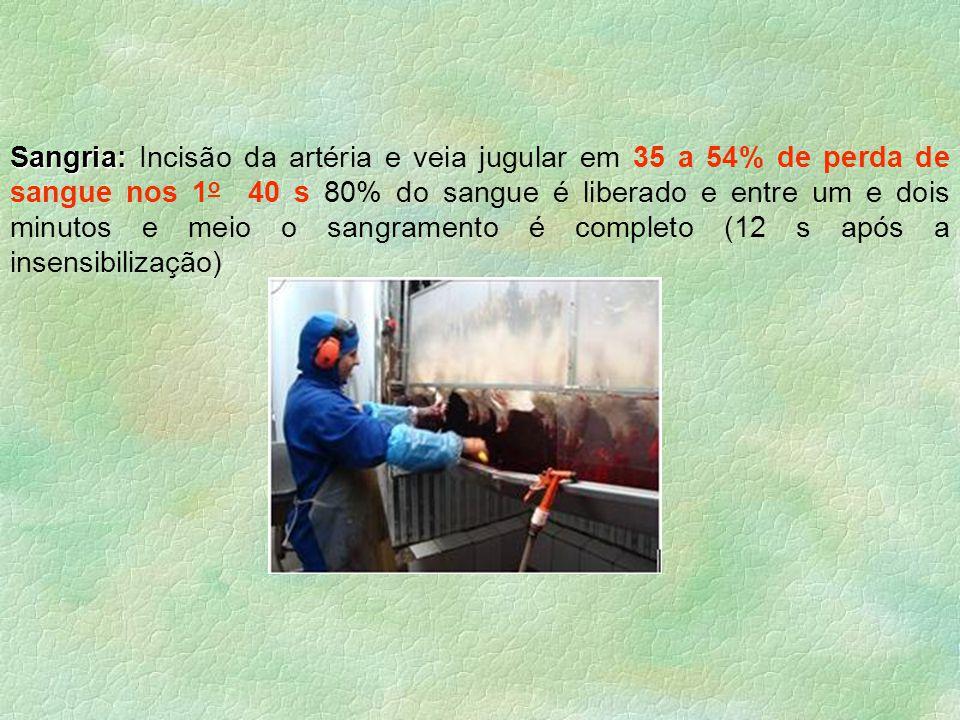 §Escaldagem: §Escaldagem: imersão das aves em tanques à 52-60 0 C (2 min) §Depenagem: §Depenagem: cilindros rotativos dotados de dedos de borracha que removem as penas Saída tanque de escaldagemMáquinas Depenadeiras Repasse manual