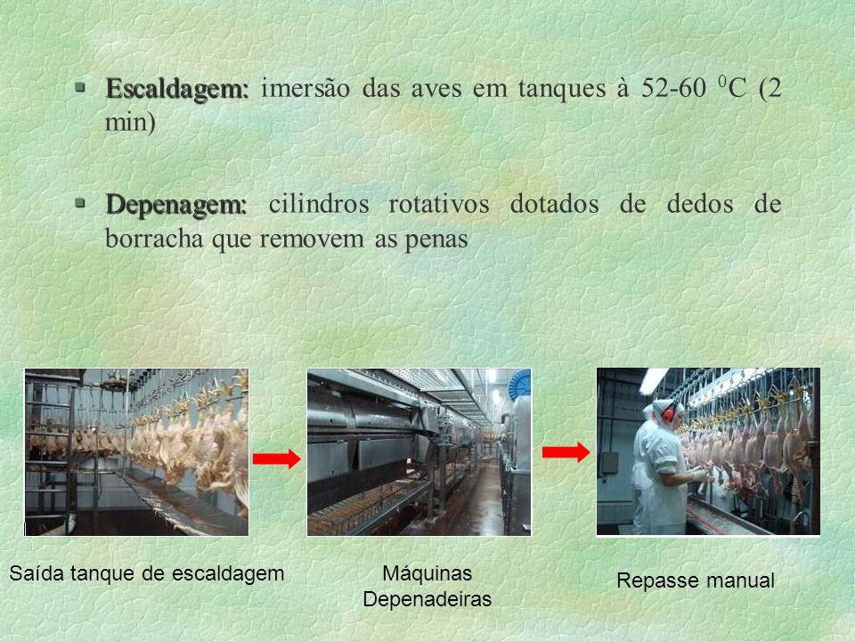§Escaldagem: §Escaldagem: imersão das aves em tanques à 52-60 0 C (2 min) §Depenagem: §Depenagem: cilindros rotativos dotados de dedos de borracha que