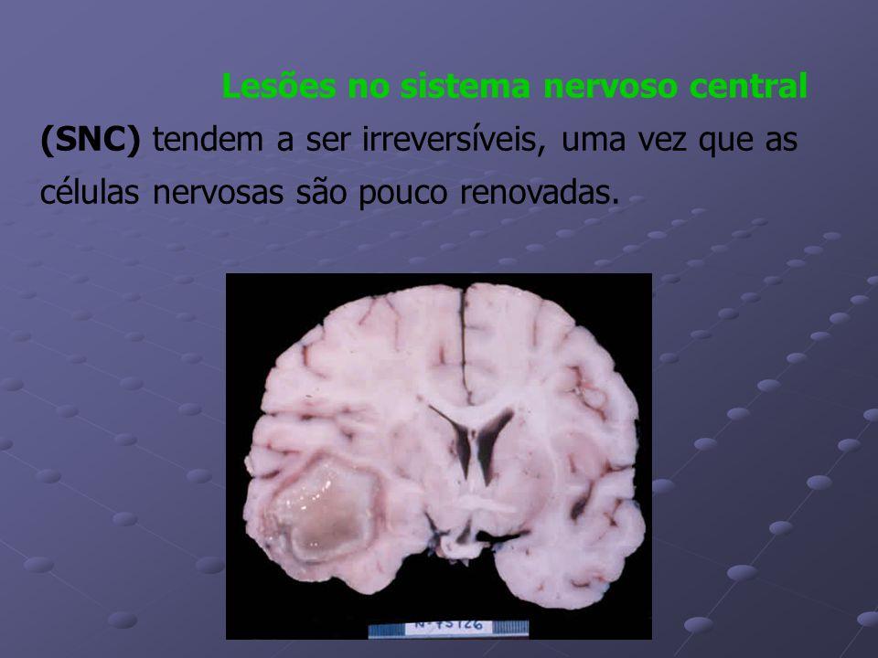 Lesões no sistema nervoso central (SNC) tendem a ser irreversíveis, uma vez que as células nervosas são pouco renovadas.