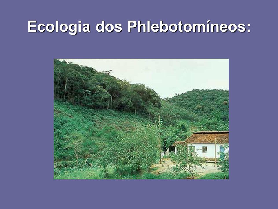 Ecologia dos Phlebotomíneos: