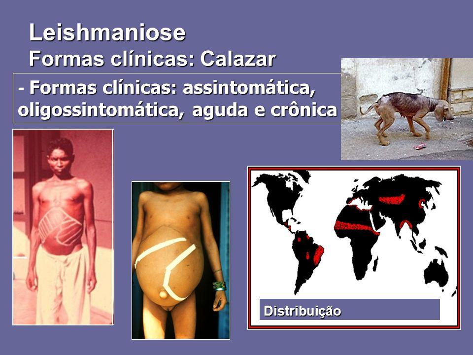 Formas clínicas: assintomática, oligossintomática, aguda e crônica - Formas clínicas: assintomática, oligossintomática, aguda e crônica Distribuição L