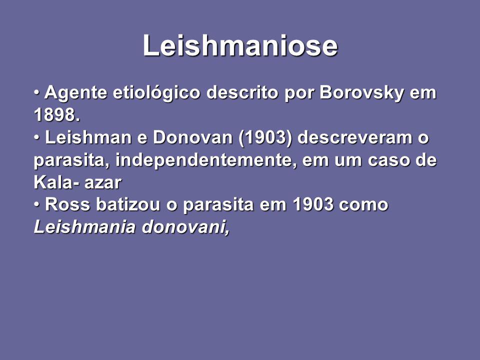 Leishmaniose Agente etiológico descrito por Borovsky em 1898. Agente etiológico descrito por Borovsky em 1898. Leishman e Donovan (1903) descreveram o
