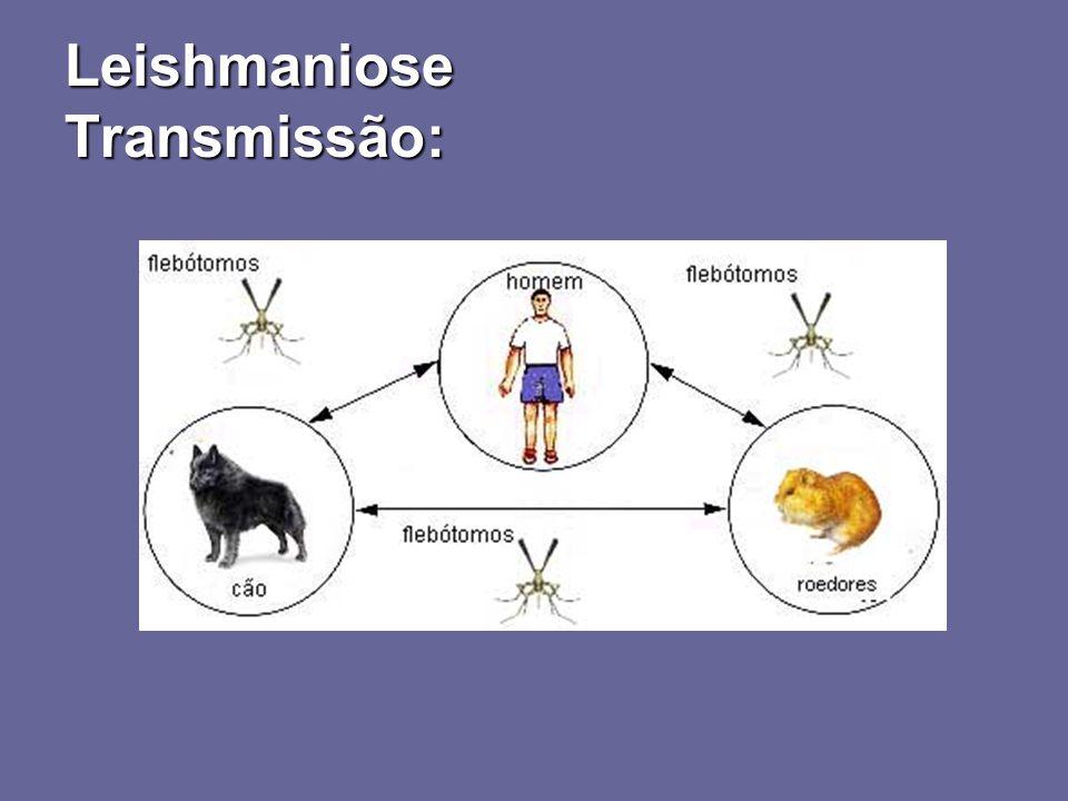 Formas clínicas: assintomática, oligossintomática, aguda e crônica - Formas clínicas: assintomática, oligossintomática, aguda e crônica Distribuição Leishmaniose Formas clínicas: Calazar