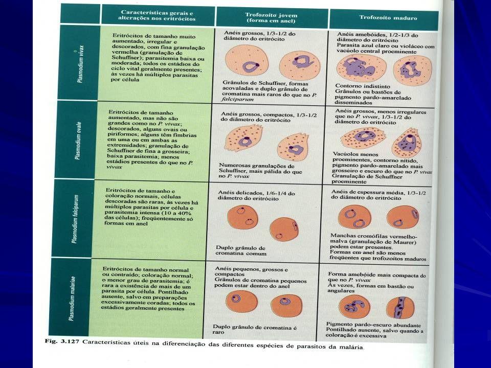 MALÁRIA *COLETIVA *COLETIVA CONTROLE  Reduzir a incidência da doença em determinadas áreas.