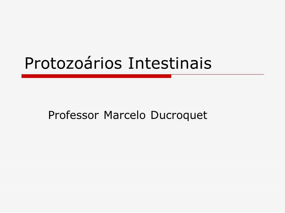 Protozoários Intestinais Professor Marcelo Ducroquet