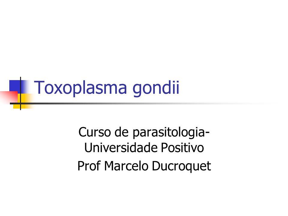 Toxoplasma gondii Curso de parasitologia- Universidade Positivo Prof Marcelo Ducroquet